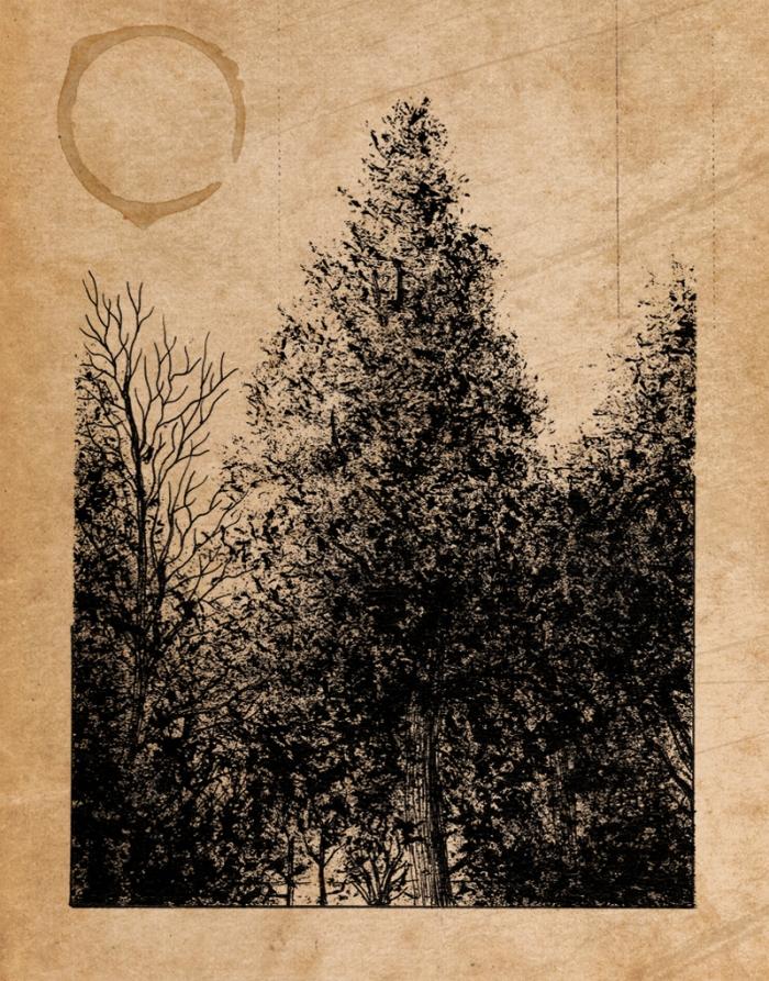 Jardin des Plantes_Nevan_SketchBook_Neon_Obscur_008